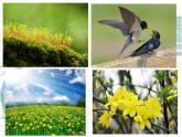 4.13 《温暖的春天》课件
