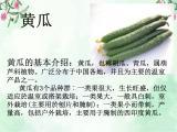 2.7《蔬菜长在哪里》课件