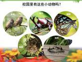 新教科版一下2-2《校園里的動物》PPT課件+教案+素材