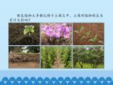 青島版科學六三制一下第9課土壤與植物PPT課件