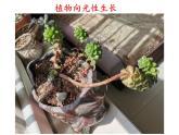 大象版科學一下3.2《太陽對動植物的影響》PPT課件+素材
