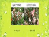 3.2太陽對動植物的影響 課件