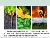 第十七章 生物圈中的动物 17.1 动物在生物圈中的作用(课件+素材+练习)