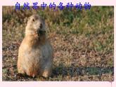 第二章生物圈中的动物 第5节动物在生物圈中的作用 PPT课件