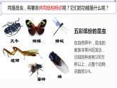 12.2 昆蟲(課件)-2019-2020學年七年級下冊生物同步精品課堂(蘇科版)(共30張PPT)