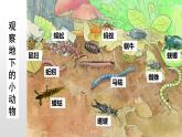 13.1 土壤里的小動物(課件)-2019-2020學年七年級下冊生物同步精品課堂(蘇科版)(共28張PPT)