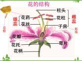 魯科版(五四學制)生物六年級下冊 2.3《開花和結果》ppt課件