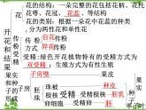 魯科版(五四學制)生物六年級下冊 第二章被子植物 復習ppt課件