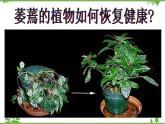 魯科版(五四學制)生物六年級下冊 3.1《水分進入植物體內的途徑》ppt課件