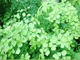 魯科版(五四學制)生物六年級下冊3.2《綠色植物參與生物圈的水循環》ppt課件