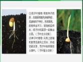(北師大七上)3.6.2 營養器官的生長