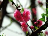 1《春》课件+音频素材