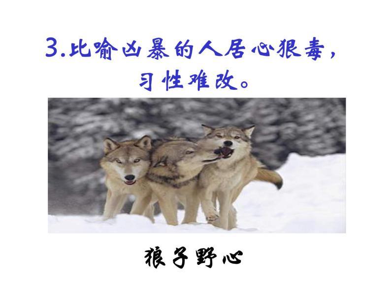 18.《狼》课件07