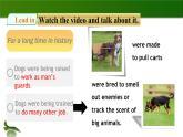 2020年牛津版七年級下冊英語Unit 3 Our animal friends Period 1 ReadingⅠ(課件+教案+同步練習)
