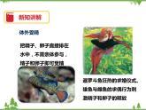 6.1《動物的生殖與發育(第2課時)》PPT課件+教案+練習+視頻 華師大版七年級科學下冊