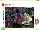 7.1《綠色開花植物的有性生殖和發育(第1課時)》PPT課件+教案+練習+視頻 華師大版七年級科學下冊
