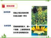 7.1《綠色開花植物的有性生殖和發育(第2課時)》PPT課件+教案+練習+視頻 華師大版七年級科學下冊