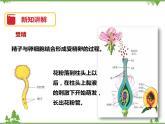 7.1《綠色開花植物的有性生殖和發育(第3課時)》PPT課件+教案+練習+視頻 華師大版七年級科學下冊