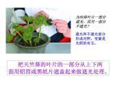 牛津上海版科學六年級下冊 綠色植物如何獲取能量 PPT課件