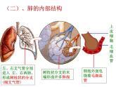 牛津上海版科學六年級下冊 第7章 空氣與生命  動植物與大氣間的氣體交換  人類的呼吸 PPT課件