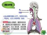 3.3 细胞呼吸——能量的转化和利用-【新教材】苏教版(2019)高中生物必修1同步课件精讲(备课堂)+习题精练(备作业)