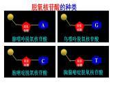 2.5 核酸是遗传信息的携带者课件PPT