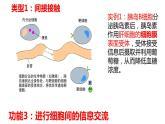 3.1细胞膜的结构和功能课件PPT