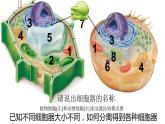 3.2 细胞器之间的分工合作课件PPT