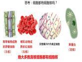 3.3细胞核的结构和功能课件PPT