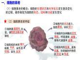 6.3 细胞的衰老和死亡课件PPT