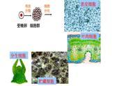 6.2细胞的分化课件PPT