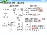 高考生物一輪復習_第5單元_遺傳的基本規律_第14講_基因的分離定律課件_新人教版